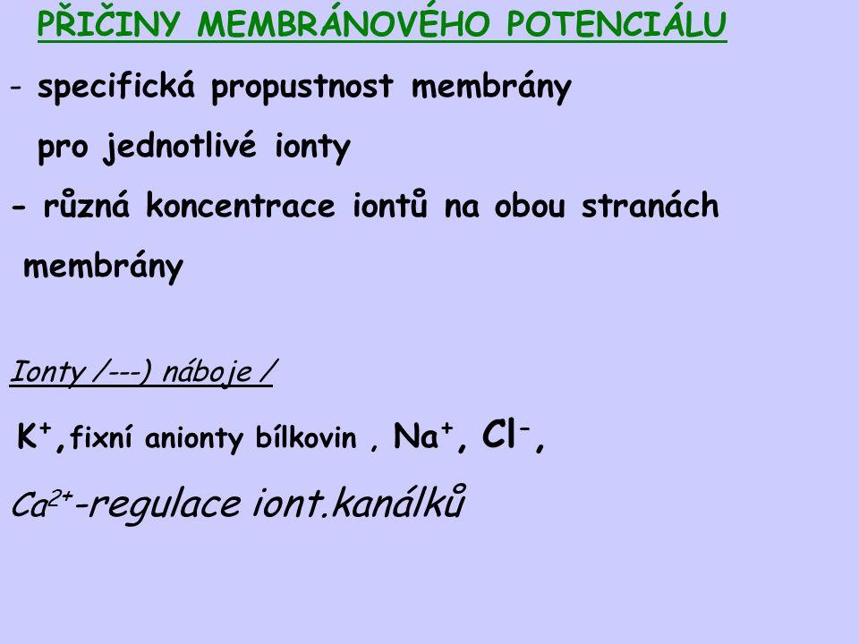 PŘIČINY MEMBRÁNOVÉHO POTENCIÁLU - specifická propustnost membrány pro jednotlivé ionty - různá koncentrace iontů na obou stranách membrány Ionty /---)