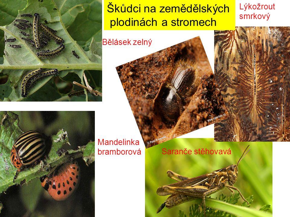 Škůdci na zemědělských plodinách a stromech Bělásek zelný Mandelinka bramborová Lýkožrout smrkový Saranče stěhovavá