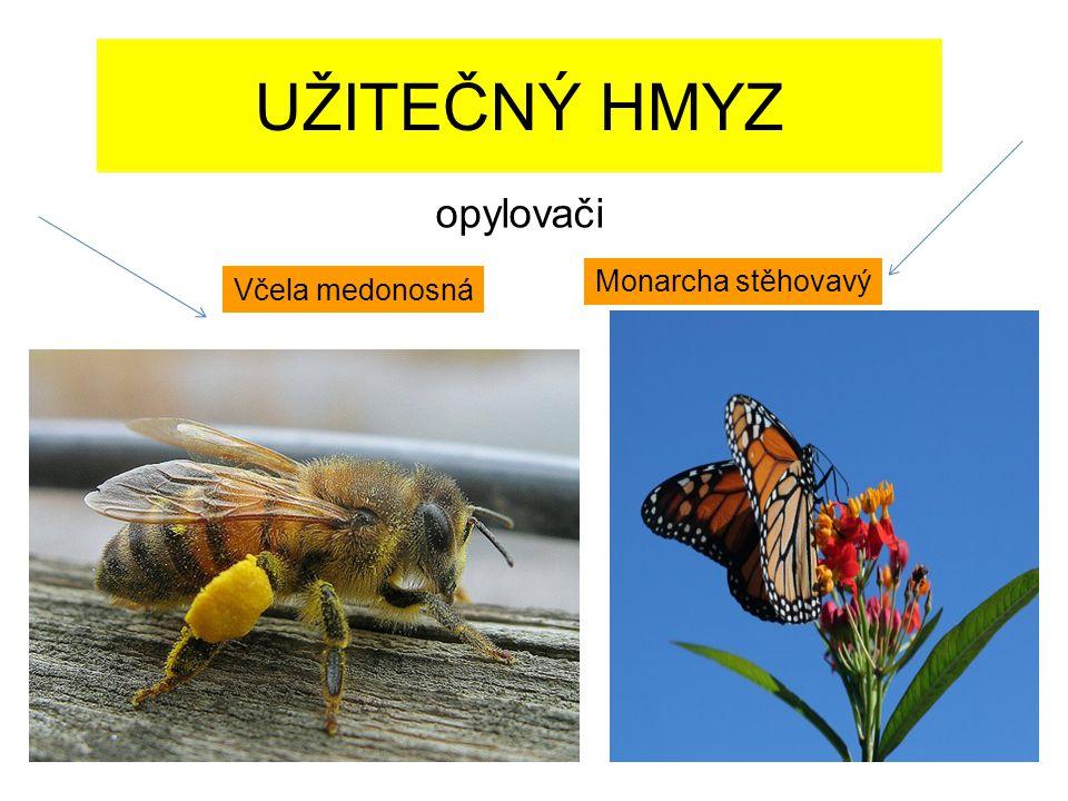 UŽITEČNÝ HMYZ Včela medonosná Monarcha stěhovavý opylovači