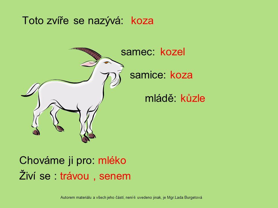 Toto zvíře se nazývá: koza samec: kozel samice: koza mládě: kůzle Chováme ji pro: mléko Živí se : trávou, senem Autorem materiálu a všech jeho částí,
