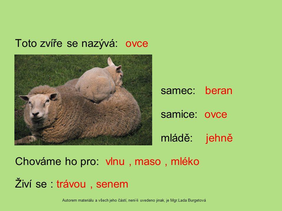Toto zvíře se nazývá: ovce samec: beran samice: ovce mládě: jehně Chováme ho pro: vlnu, maso, mléko Živí se : trávou, senem Autorem materiálu a všech