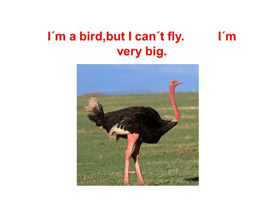 I´m small and brown. I can fly,but I´m not a bird.
