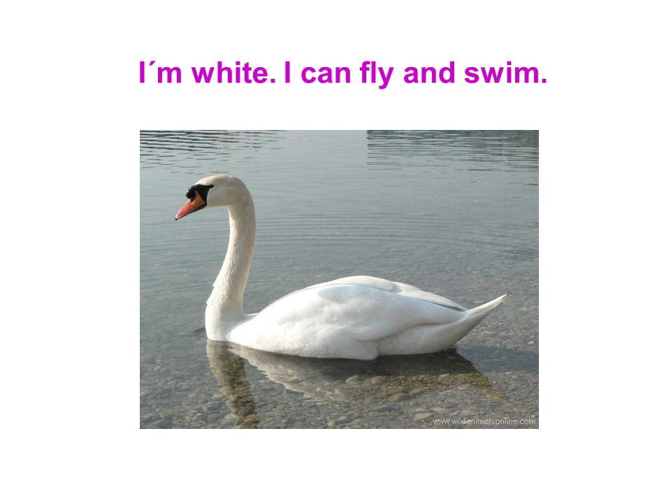 I´m white. I can fly and swim.