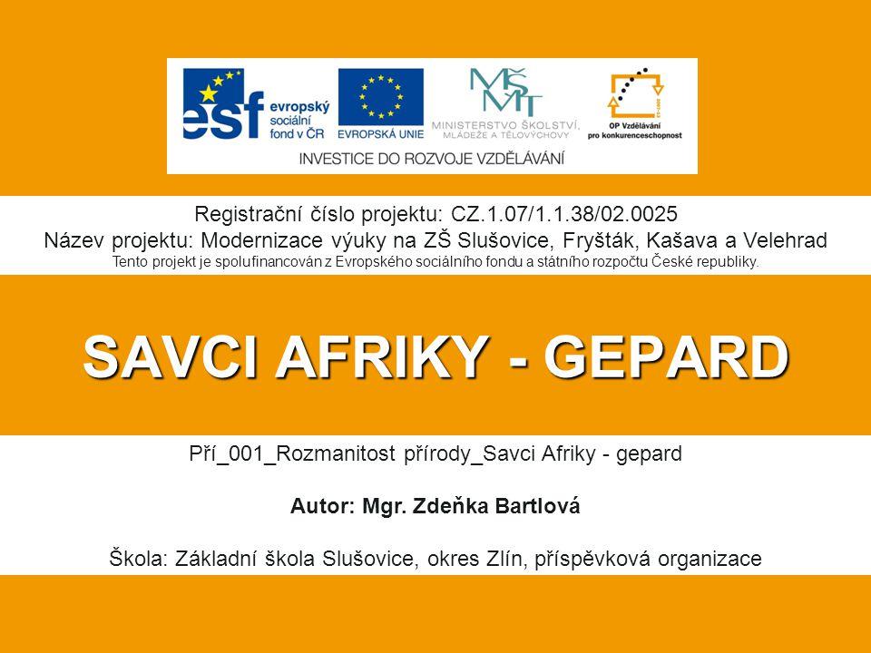 SAVCI AFRIKY - GEPARD Pří_001_Rozmanitost přírody_Savci Afriky - gepard Autor: Mgr.