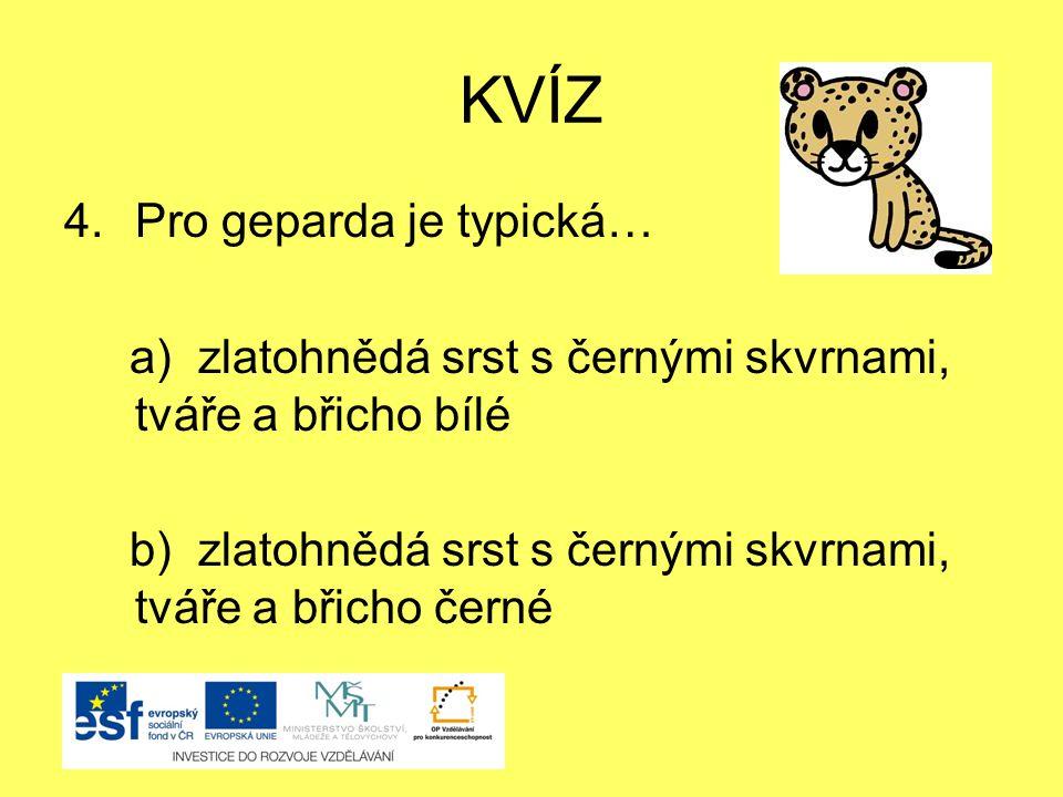 KVÍZ 4.Pro geparda je typická… a) zlatohnědá srst s černými skvrnami, tváře a břicho bílé b) zlatohnědá srst s černými skvrnami, tváře a břicho černé