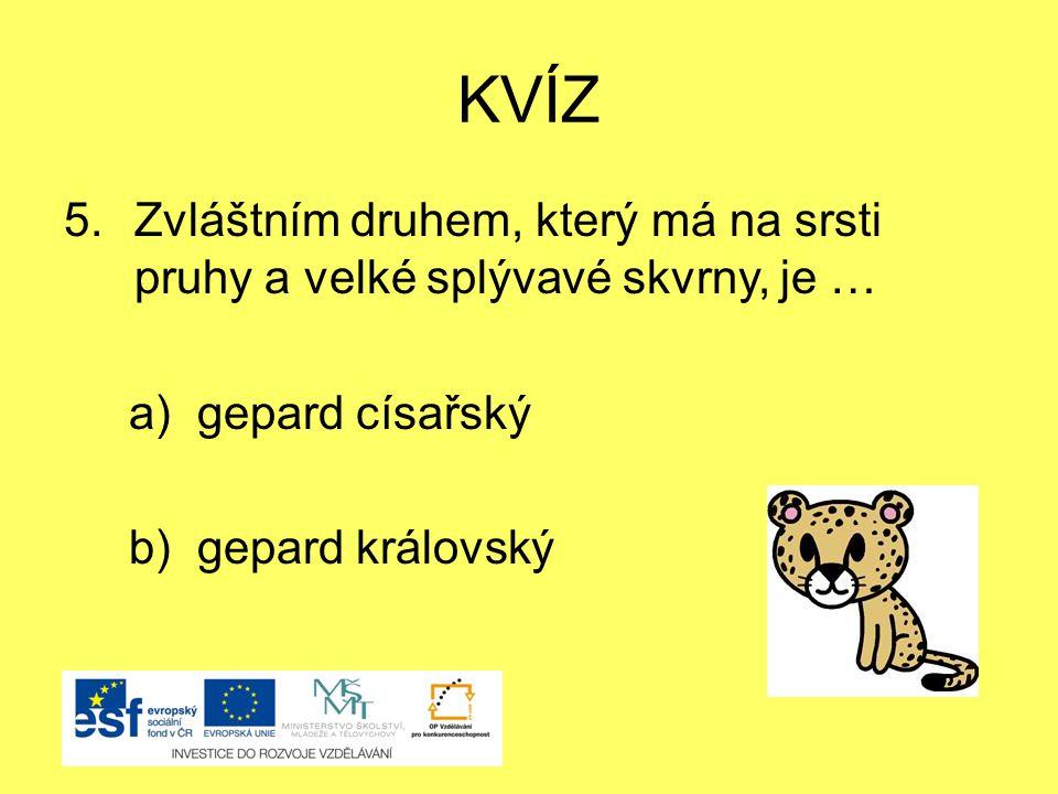 KVÍZ 5.Zvláštním druhem, který má na srsti pruhy a velké splývavé skvrny, je … a) gepard císařský b) gepard královský