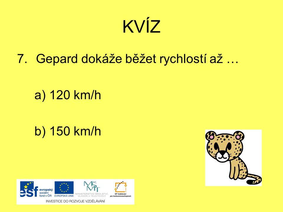 KVÍZ 7.Gepard dokáže běžet rychlostí až … a) 120 km/h b) 150 km/h