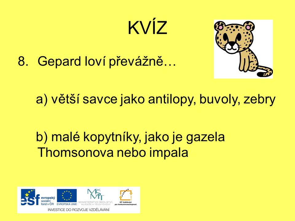 KVÍZ 8.Gepard loví převážně… a) větší savce jako antilopy, buvoly, zebry b) malé kopytníky, jako je gazela Thomsonova nebo impala