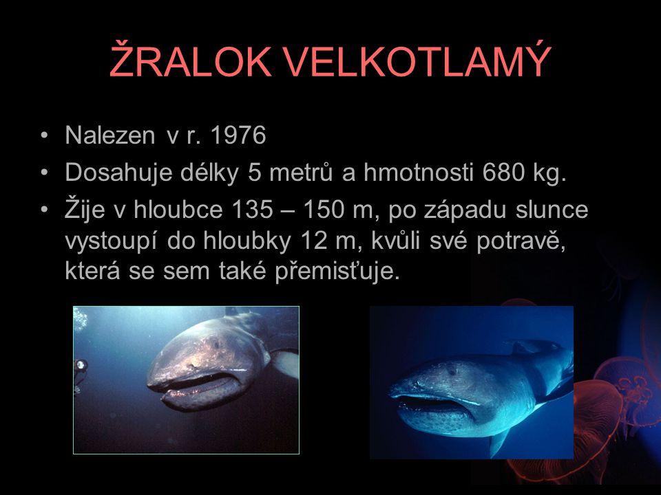 ŽRALOK VELKOTLAMÝ Nalezen v r. 1976 Dosahuje délky 5 metrů a hmotnosti 680 kg. Žije v hloubce 135 – 150 m, po západu slunce vystoupí do hloubky 12 m,
