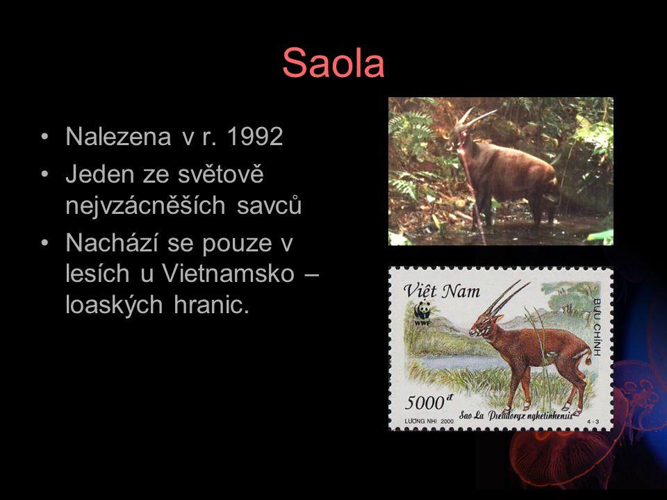 Saola Nalezena v r. 1992 Jeden ze světově nejvzácněších savců Nachází se pouze v lesích u Vietnamsko – loaských hranic.