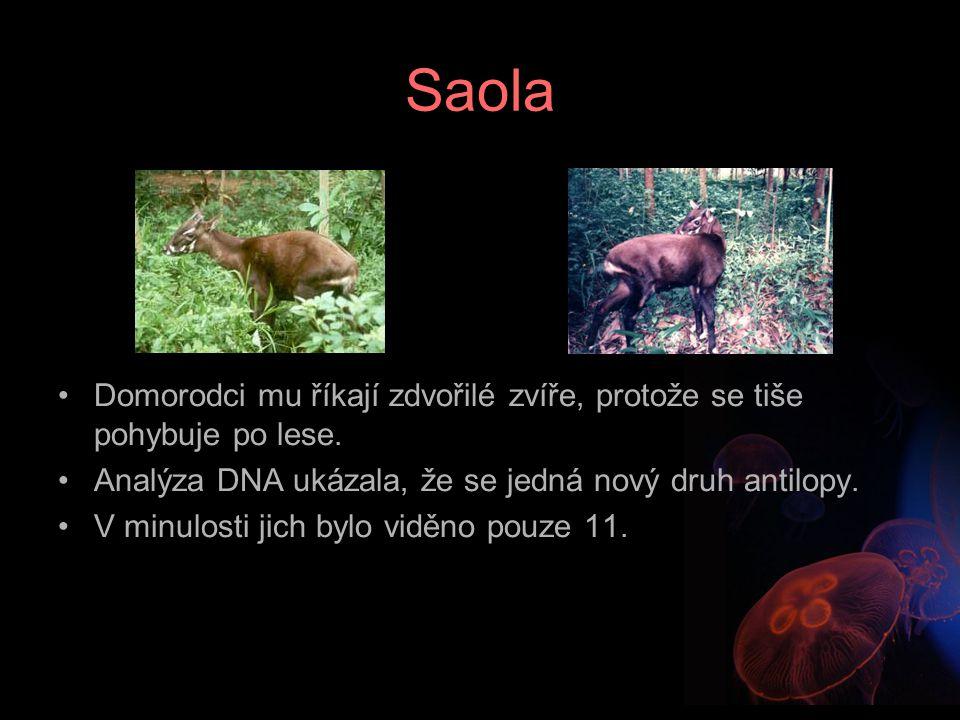 Saola Domorodci mu říkají zdvořilé zvíře, protože se tiše pohybuje po lese. Analýza DNA ukázala, že se jedná nový druh antilopy. V minulosti jich bylo