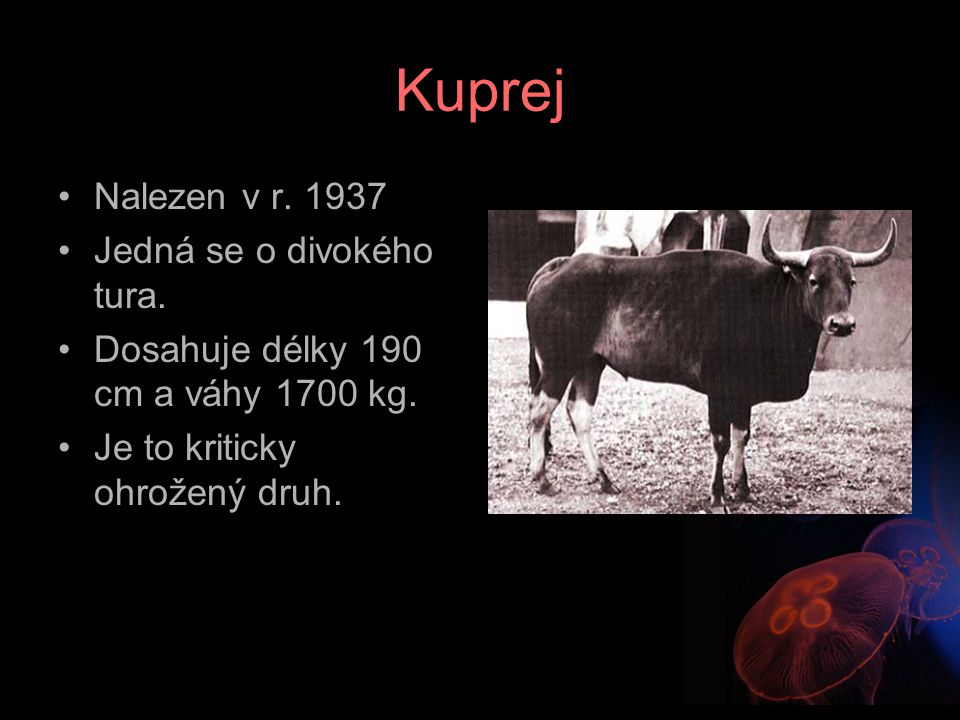 Kuprej Nalezen v r. 1937 Jedná se o divokého tura. Dosahuje délky 190 cm a váhy 1700 kg. Je to kriticky ohrožený druh.