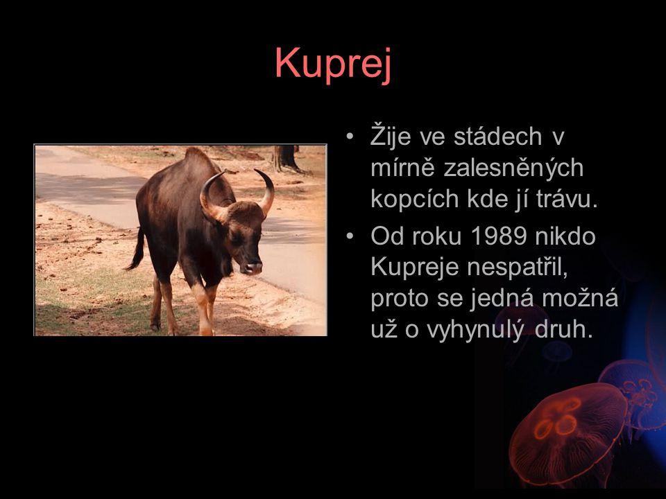 Kuprej Žije ve stádech v mírně zalesněných kopcích kde jí trávu. Od roku 1989 nikdo Kupreje nespatřil, proto se jedná možná už o vyhynulý druh.