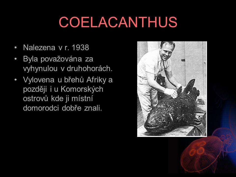 COELACANTHUS Nalezena v r. 1938 Byla považována za vyhynulou v druhohorách. Vylovena u břehů Afriky a později i u Komorských ostrovů kde ji místní dom