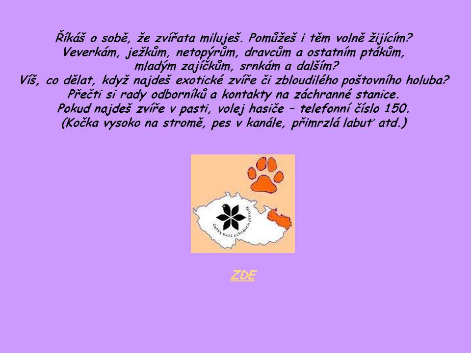 Znáš tři fámy o kastracích: 1) Každá fenka nebo kočka by měla mít alespoň jednou za život mladé.