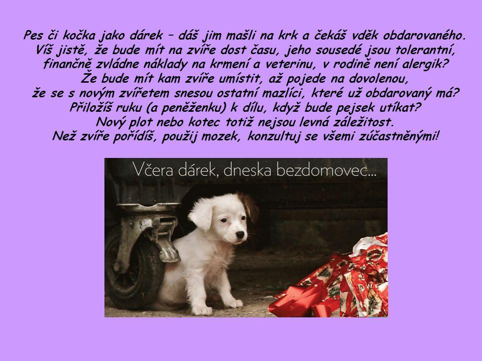 Pes či kočka jako dárek – dáš jim mašli na krk a čekáš vděk obdarovaného. Víš jistě, že bude mít na zvíře dost času, jeho sousedé jsou tolerantní, fin