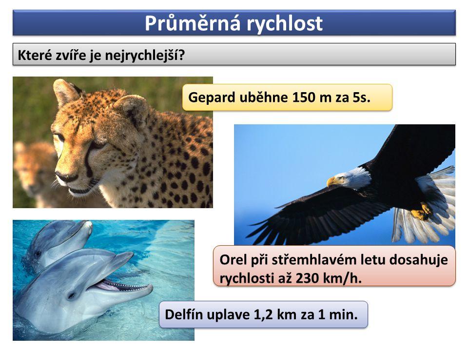 Průměrná rychlost Které zvíře je nejrychlejší? Orel při střemhlavém letu dosahuje rychlosti až 230 km/h. Delfín uplave 1,2 km za 1 min. Gepard uběhne