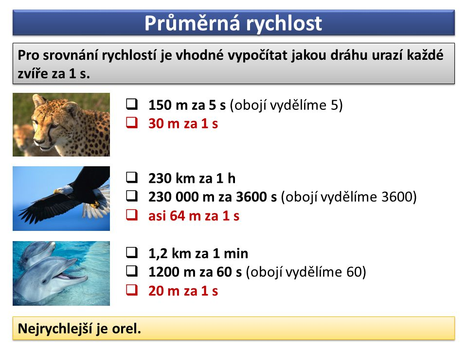 Průměrná rychlost Pro srovnání rychlostí je vhodné vypočítat jakou dráhu urazí každé zvíře za 1 s.  150 m za 5 s (obojí vydělíme 5)  30 m za 1 s  2