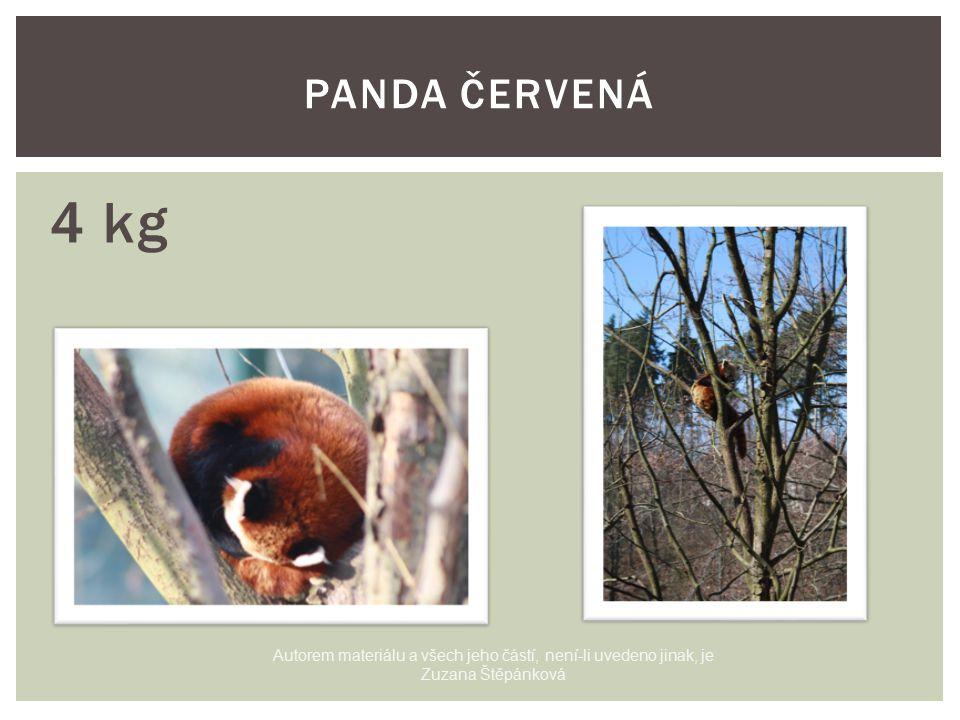 4 kg PANDA ČERVENÁ Autorem materiálu a všech jeho částí, není-li uvedeno jinak, je Zuzana Štěpánková
