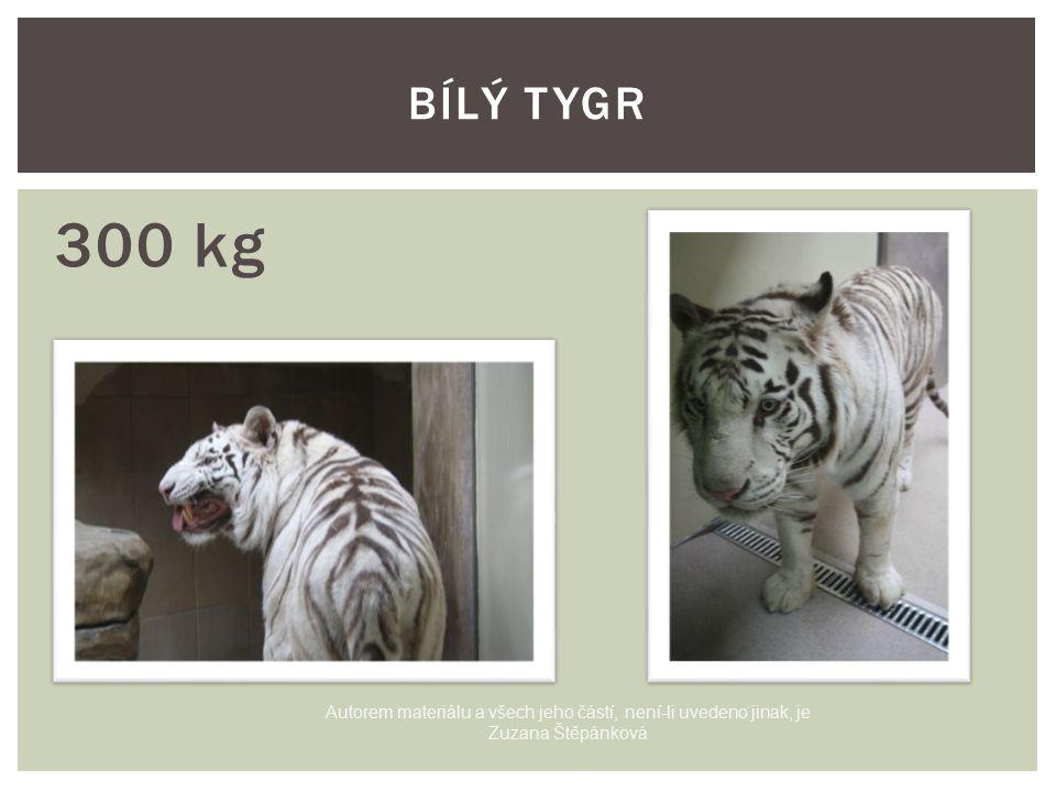300 kg BÍLÝ TYGR Autorem materiálu a všech jeho částí, není-li uvedeno jinak, je Zuzana Štěpánková