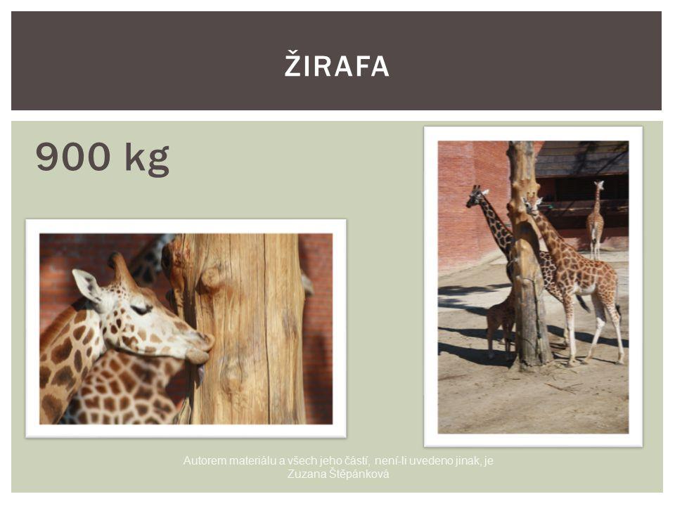900 kg ŽIRAFA Autorem materiálu a všech jeho částí, není-li uvedeno jinak, je Zuzana Štěpánková