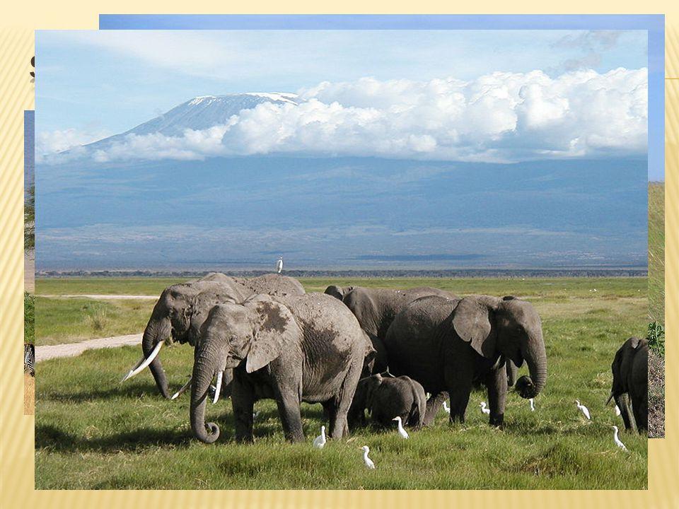  Keňa Serengeti Tsavo  Tanzánie Serengeti Ngorongoro (kráter nečinné sopky) Ruaha
