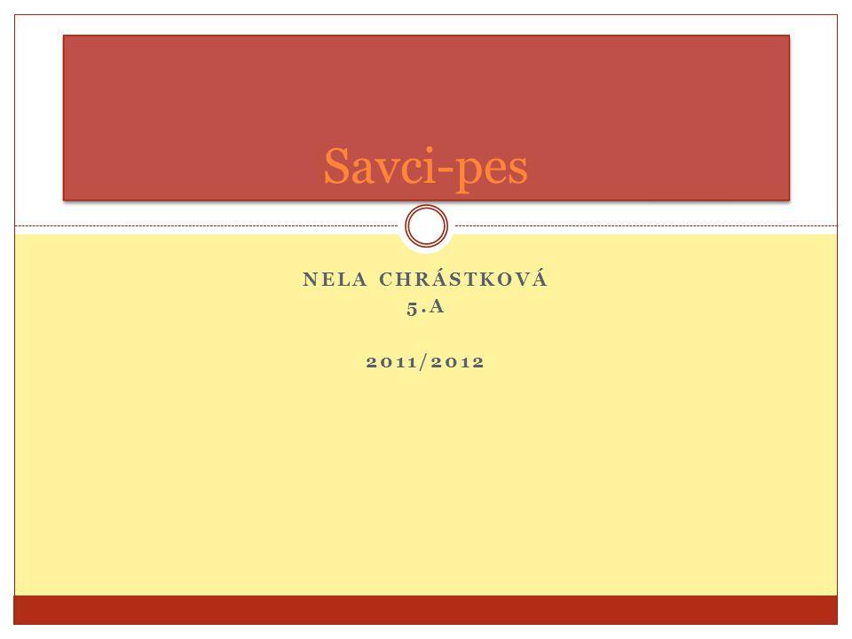 NELA CHRÁSTKOVÁ 5.A 2011/2012 Savci-pes