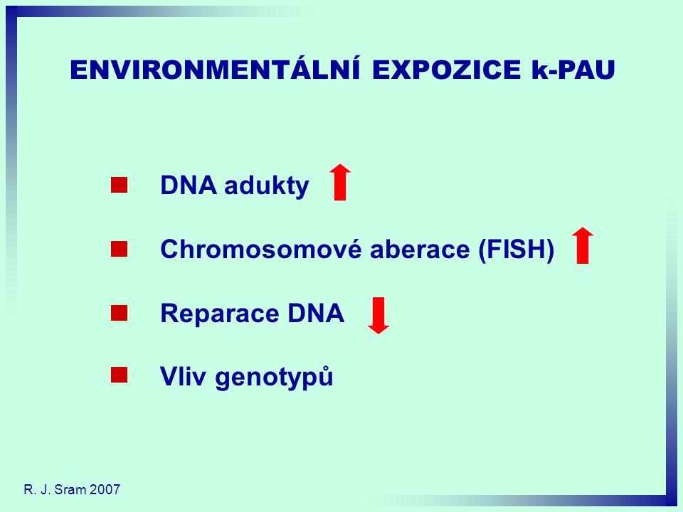 ENVIRONMENTÁLNÍ EXPOZICE k-PAU DNA adukty Chromosomové aberace (FISH) Reparace DNA Vliv genotypů R.