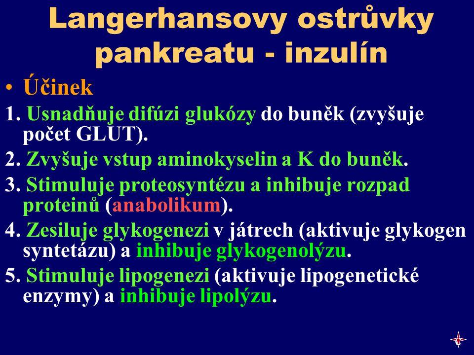 Langerhansovy ostrůvky pankreatu - inzulín Účinek 1. Usnadňuje difúzi glukózy do buněk (zvyšuje počet GLUT). 2. Zvyšuje vstup aminokyselin a K do buně
