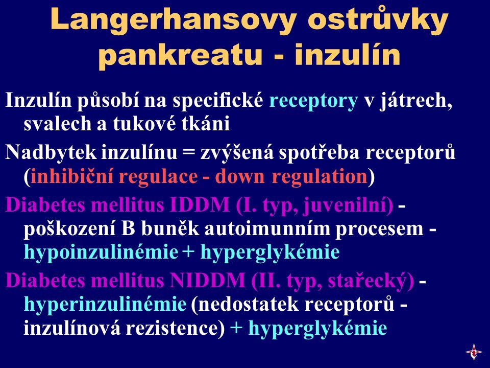 Langerhansovy ostrůvky pankreatu - inzulín Inzulín působí na specifické receptory v játrech, svalech a tukové tkáni Nadbytek inzulínu = zvýšená spotře