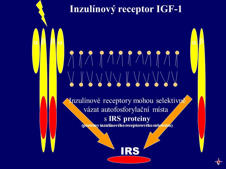    IRS Inzulínový receptor IGF-1 Inzulínové receptory mohou selektivně vázat autofosforylační místa s IRS proteiny (proteiny inzulínového recept