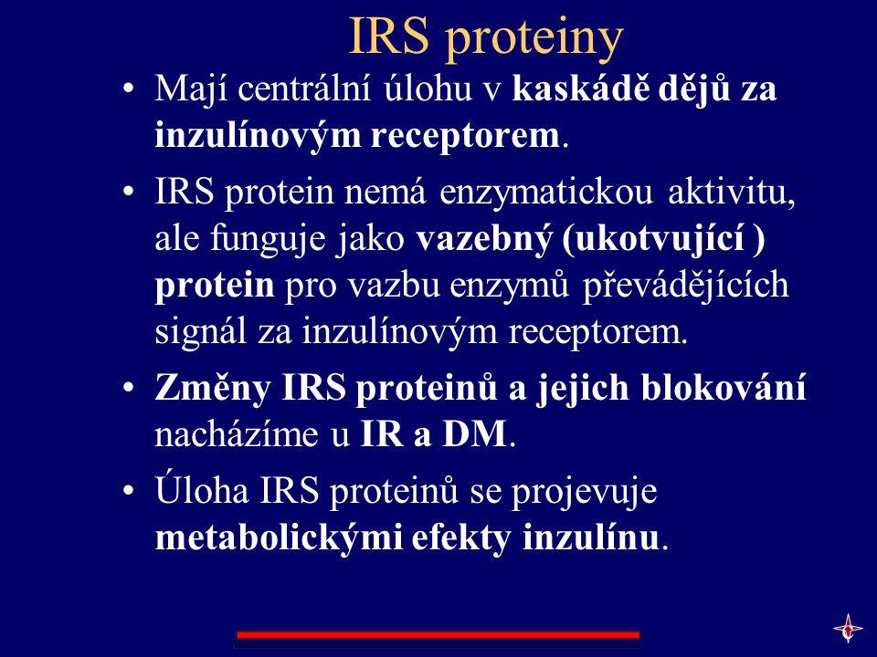 IRS proteiny Mají centrální úlohu v kaskádě dějů za inzulínovým receptorem. IRS protein nemá enzymatickou aktivitu, ale funguje jako vazebný (ukotvují