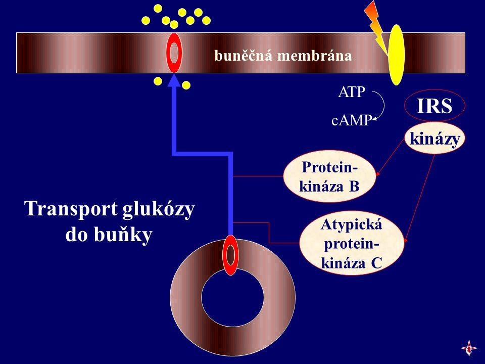 ATP cAMP IRS kinázy Protein- kináza B Transport glukózy do buňky Atypická protein- kináza C buněčná membrána c