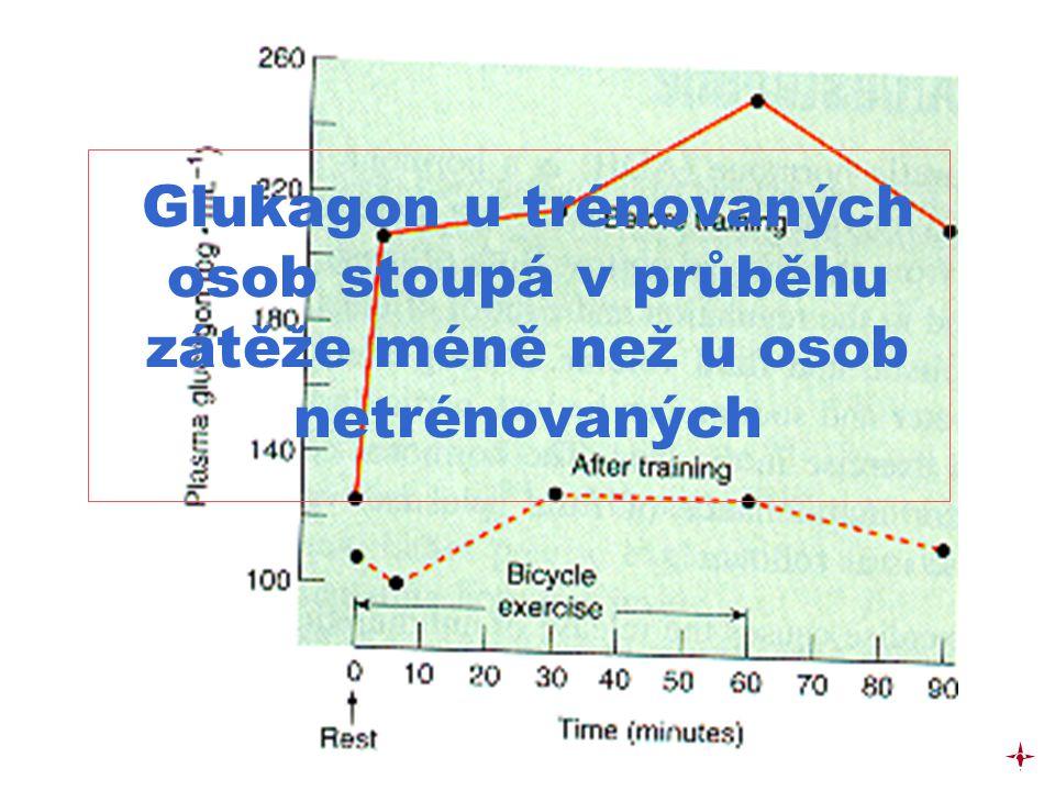 Glukagon u trénovaných osob stoupá v průběhu zátěže méně než u osob netrénovaných c