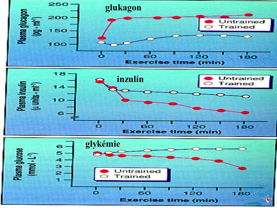 glukagon inzulín glykémie c