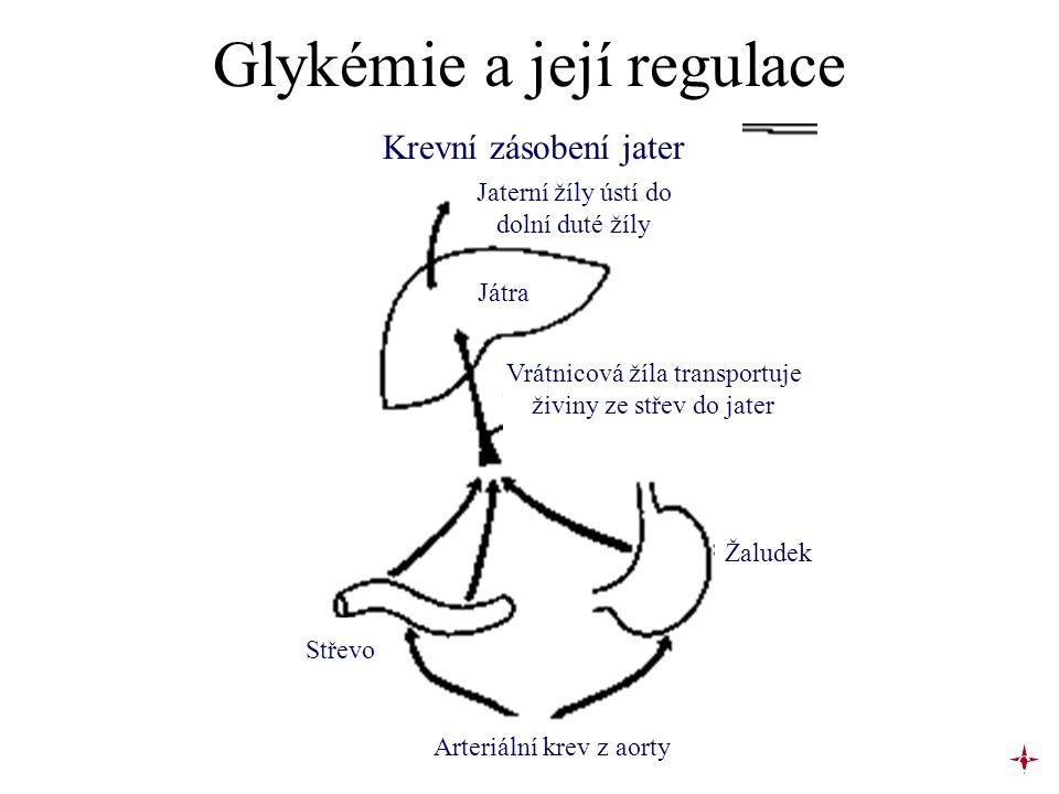 Glykémie a její regulace Krevní zásobení jater Jaterní žíly ústí do dolní duté žíly Játra Vrátnicová žíla transportuje živiny ze střev do jater Žalude