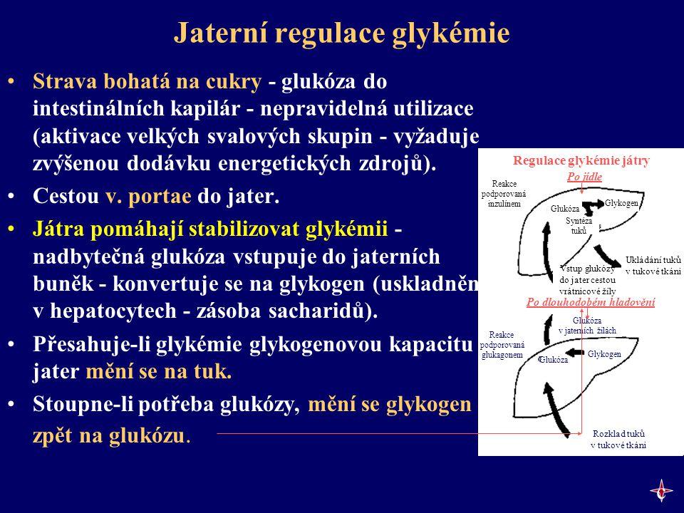 Jaterní regulace glykémie Strava bohatá na cukry - glukóza do intestinálních kapilár - nepravidelná utilizace (aktivace velkých svalových skupin - vyž
