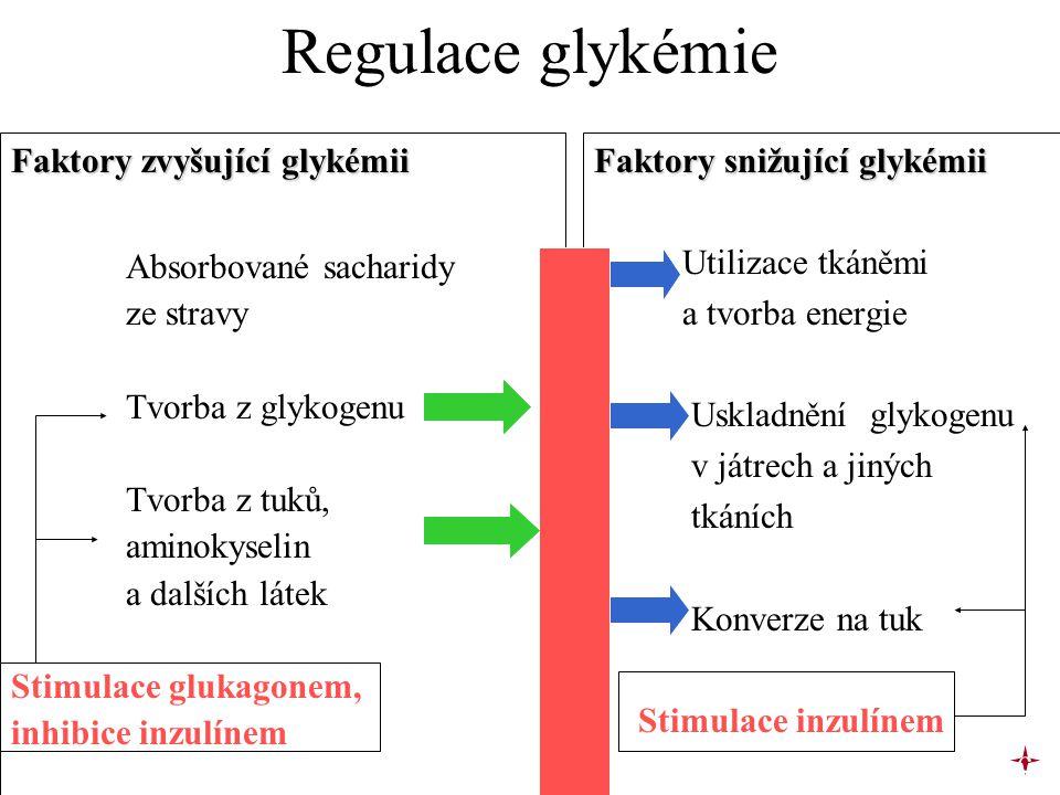 Regulace glykémie Faktory zvyšující glykémii Absorbované sacharidy ze stravy Tvorba z glykogenu Tvorba z tuků, aminokyselin a dalších látek Stimulace