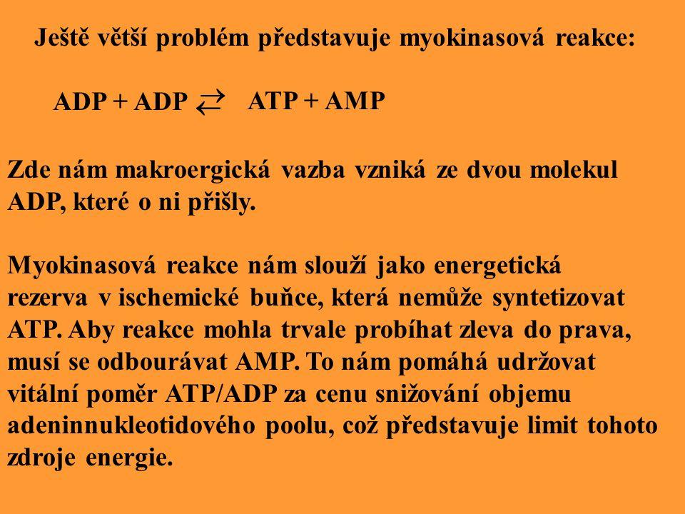 Ještě větší problém představuje myokinasová reakce: ADP + ADP   ATP + AMP Zde nám makroergická vazba vzniká ze dvou molekul ADP, které o ni přišly.