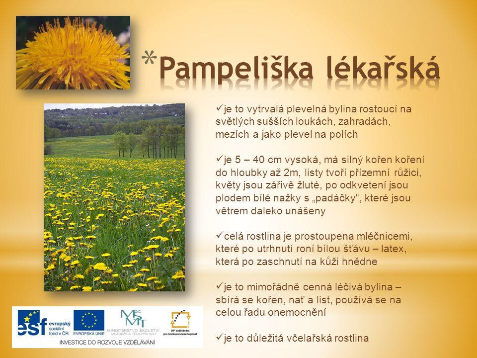 http://www.wikimedia.com/ http://www.wikimedia.com/  http://cs.wikipedia.org  ŠTIKOVÁ, Mg.