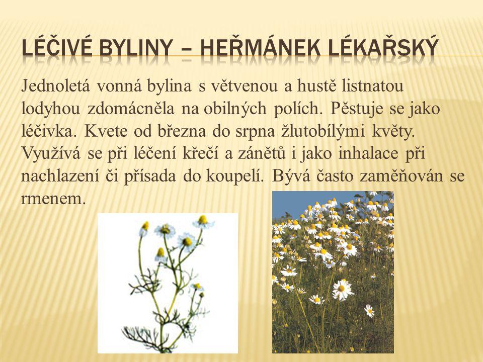 Jednoletá vonná bylina s větvenou a hustě listnatou lodyhou zdomácněla na obilných polích. Pěstuje se jako léčivka. Kvete od března do srpna žlutobílý
