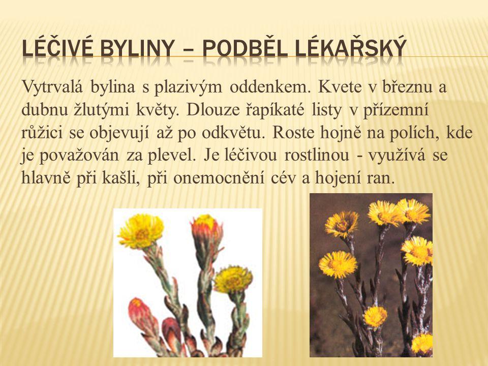 Vytrvalá bylina s plazivým oddenkem.Kvete v březnu a dubnu žlutými květy.
