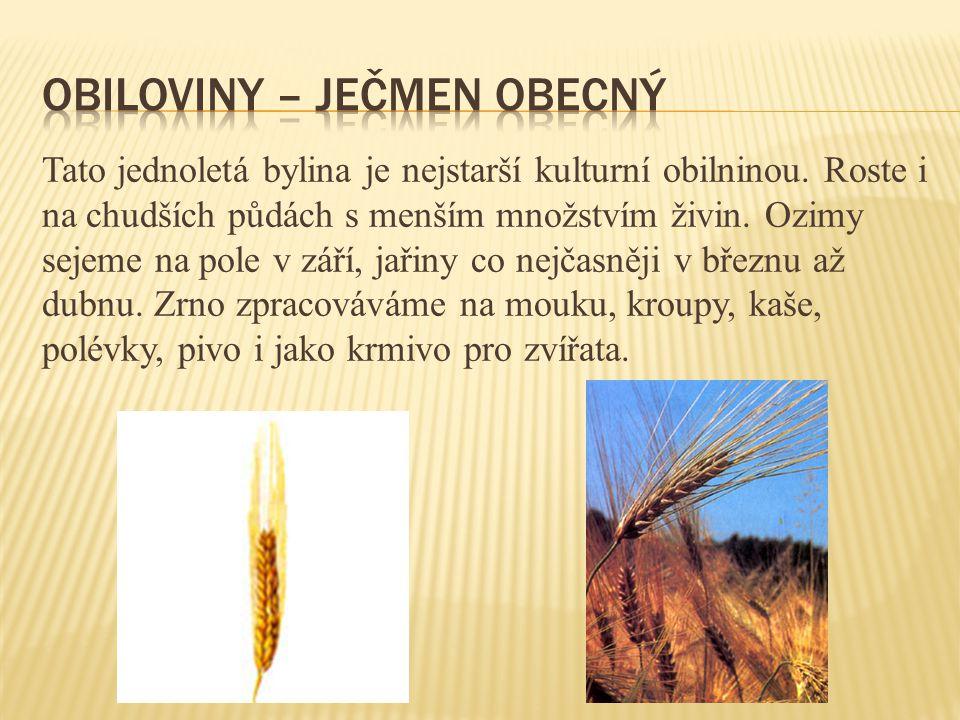 Tato jednoletá bylina je nejstarší kulturní obilninou. Roste i na chudších půdách s menším množstvím živin. Ozimy sejeme na pole v září, jařiny co nej