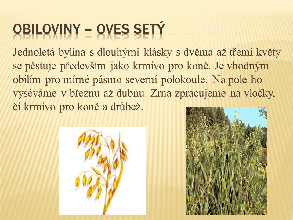 Jednoletá bylina s dlouhými klásky s dvěma až třemi květy se pěstuje především jako krmivo pro koně.