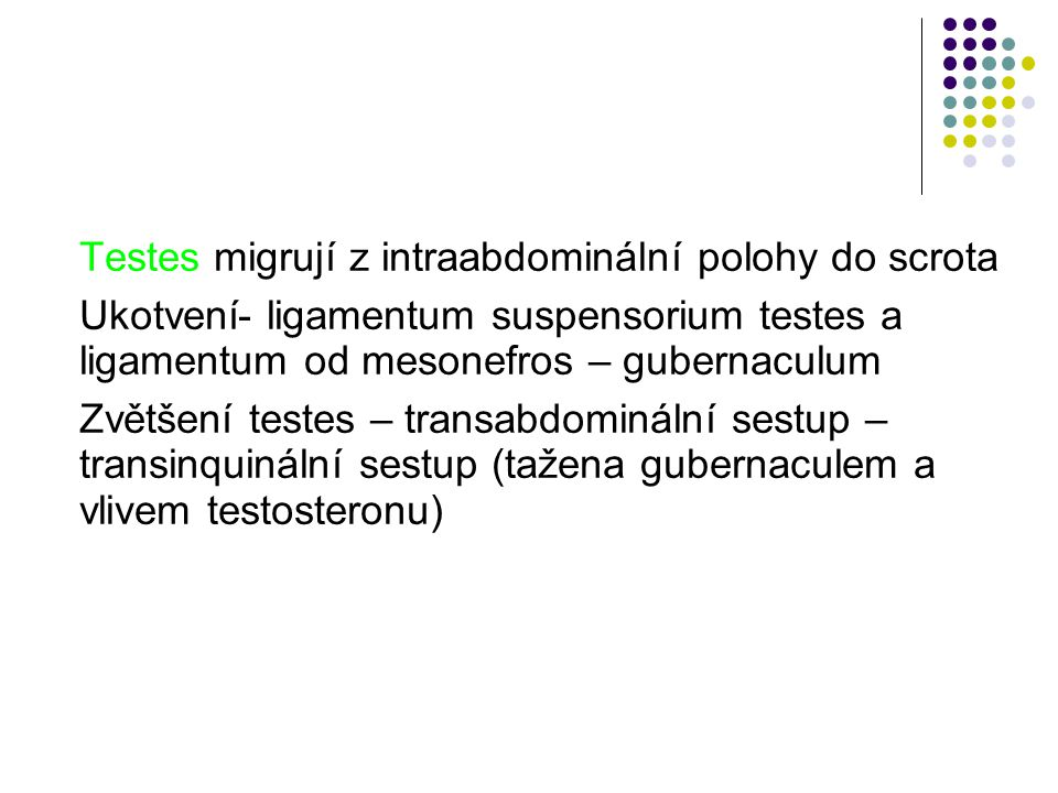 Testes migrují z intraabdominální polohy do scrota Ukotvení- ligamentum suspensorium testes a ligamentum od mesonefros – gubernaculum Zvětšení testes – transabdominální sestup – transinquinální sestup (tažena gubernaculem a vlivem testosteronu)