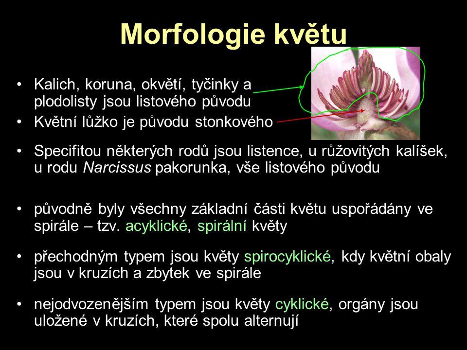 Morfologie květu Kalich, koruna, okvětí, tyčinky a plodolisty jsou listového původu Květní lůžko je původu stonkového Specifitou některých rodů jsou l