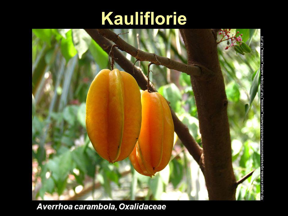Kauliflorie http://upload.wikimedia.org/wikipedia/commons/thumb/b/b5/Averrhoa_carambola_Fruit.JPG/1024px-Averrhoa_carambola_Fruit.JPG Averrhoa carambo