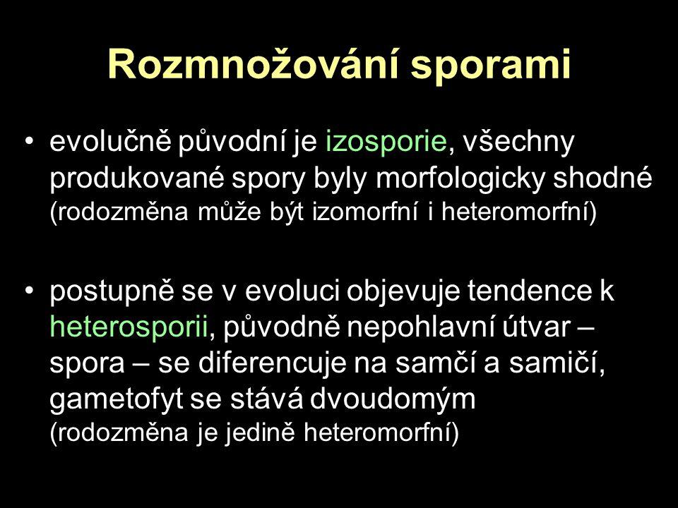 Rozmnožování sporami evolučně původní je izosporie, všechny produkované spory byly morfologicky shodné (rodozměna může být izomorfní i heteromorfní) p