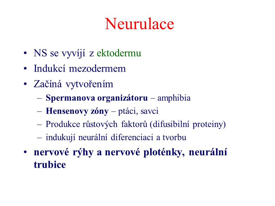 NS se vyvíjí z ektodermu Indukcí mezodermem Začíná vytvořením –Spermanova organizátoru – amphibia –Hensenovy zóny – ptáci, savci –Produkce růstových f