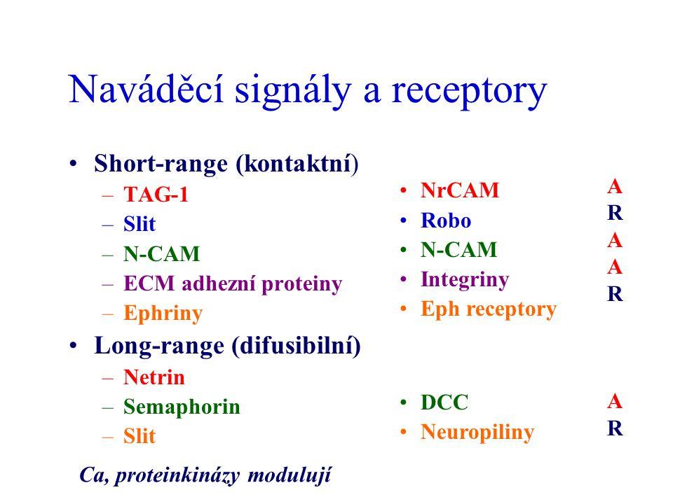 Naváděcí signály a receptory Short-range (kontaktní) –TAG-1 –Slit –N-CAM –ECM adhezní proteiny –Ephriny Long-range (difusibilní) –Netrin –Semaphorin –